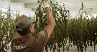 Cannabis Industry Job Postings Increases 1,242% in This Western State – ConnectIn420